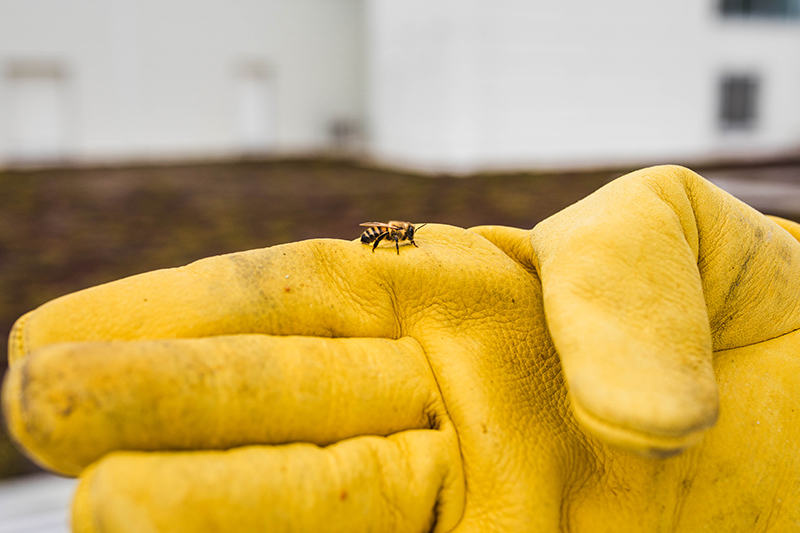 A bumblebee sits atop a yellow glove